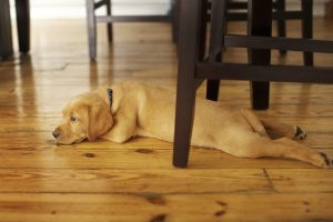 In Tony's Flooring recent blog post, this GTA flooring specialist answers the questions pet owners want to know about hardwood flooring options for their home.
