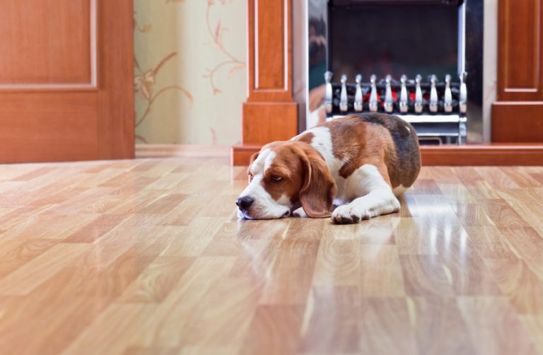 In Tony's Flooring recent blog post, this GTA flooring specialist explains how to get stylish and durable flooring when you have pets in the home.